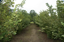 Orchard 2