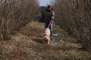 Franklin and Ginger on a truffle hunt