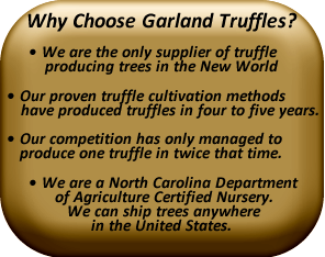 Why choose Garland Truffles?